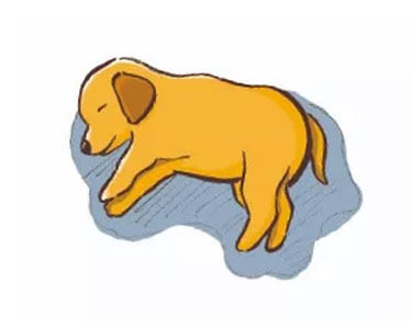 dogs sleeping positions - 7