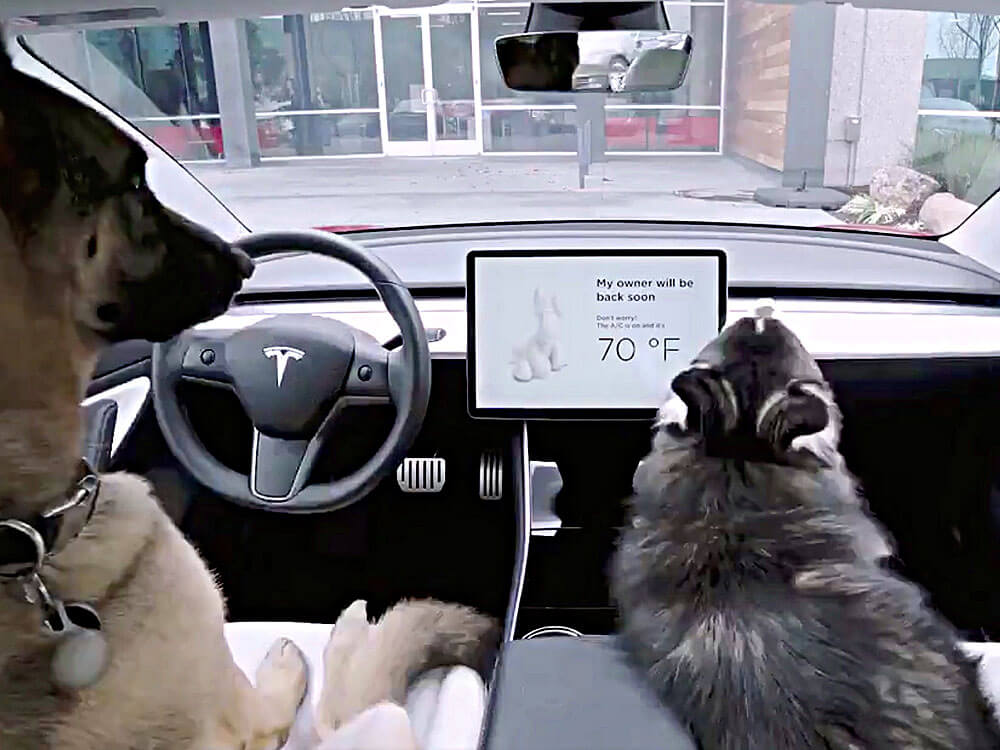 Tesla's dog mode feature tested for the two dogs in a car
