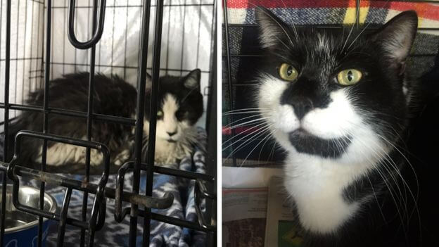 a rescue cat on the left, and a cat named Traveller on the right which merebeth called to transport