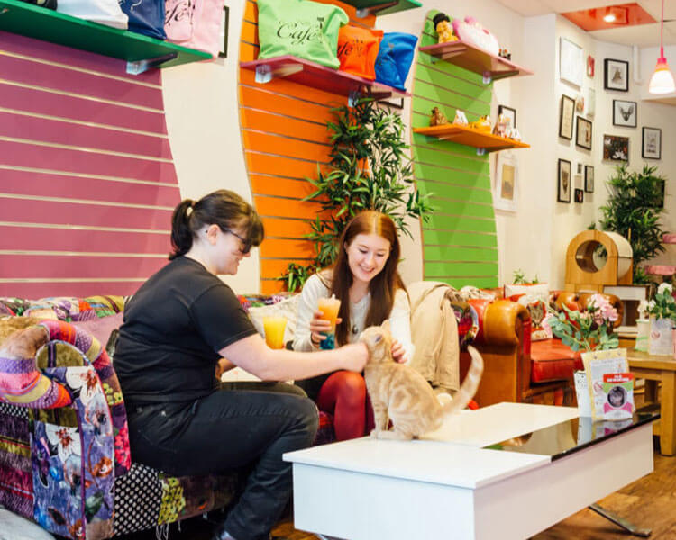 two ladies cuddling a cat while enjoying their drinks from Kitty Café in Birmingham
