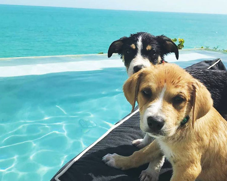 two puppies near a beach of the Potcake Place