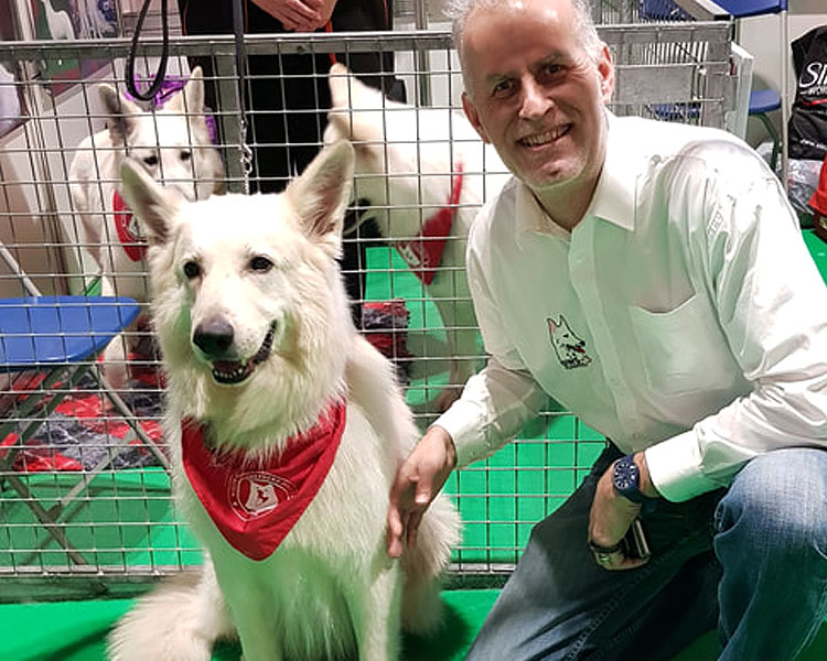 a white swiss shepherd and its owner competing for crufts 2019 dog show