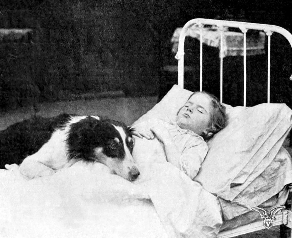 Jean, the Vitagraph Dog