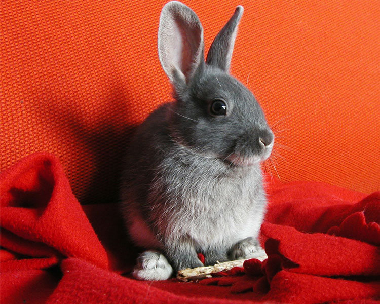 a bunny sitting on a red cloth
