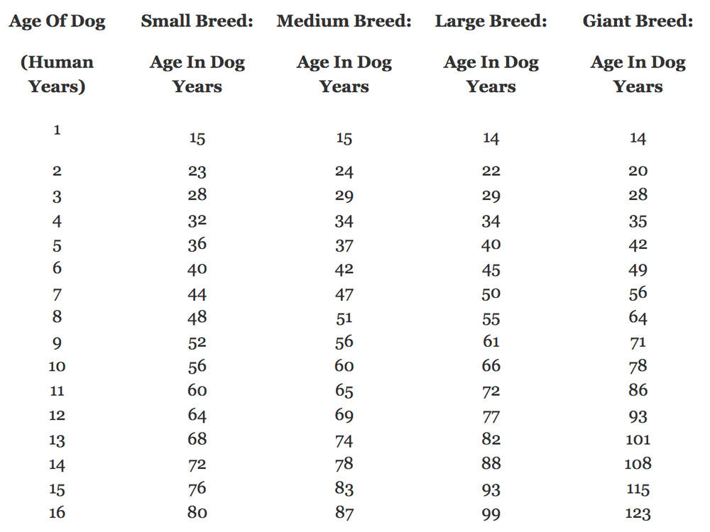 a calculation of dogs age