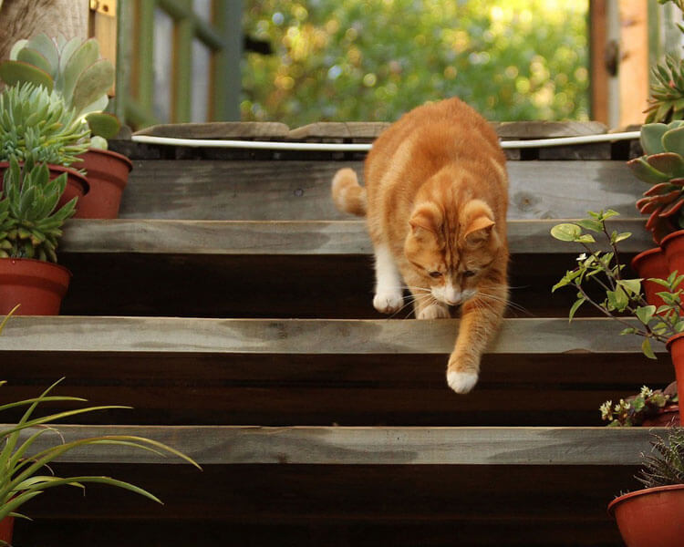 cat going down the stairs in its home