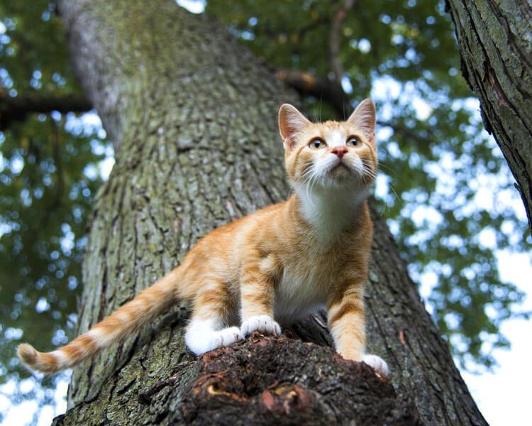 do cats have nine lives