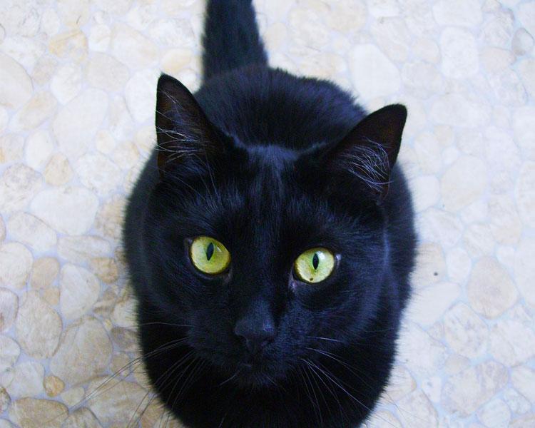 a black cat looking