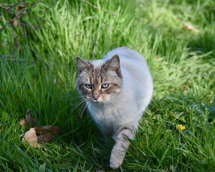 a cat walking on the grass field