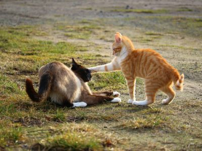 Cat Fight – 5 Practical Tips to Stop It