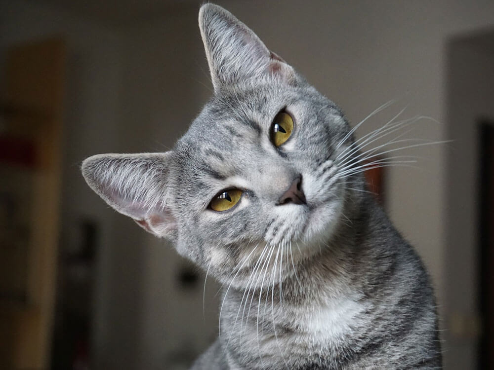 Cat's IQ: 3 Amazing Cat Abilities You Didn't Know