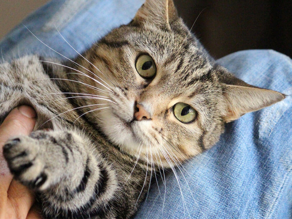 8 Not-So-Subtle Signs Your Cat Loves You