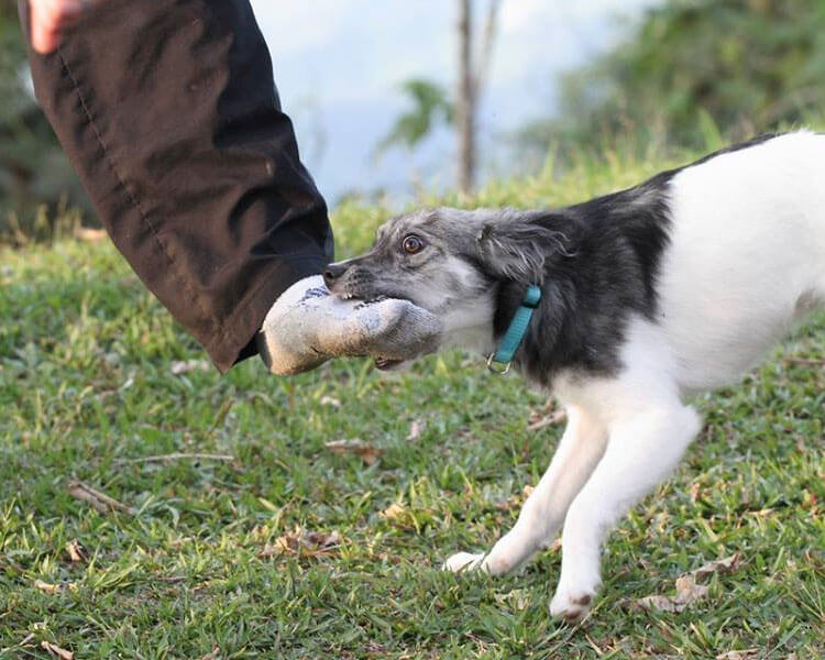 how to stop a dog from biting - 1
