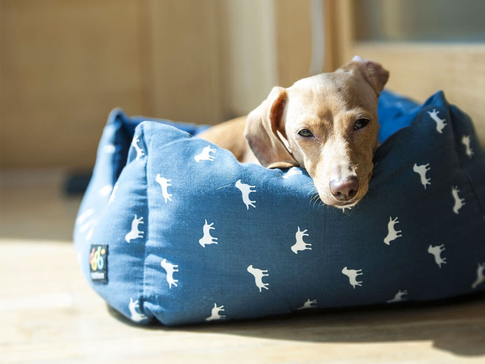 9 Tips for Pampering Pets in a More Energy-Efficient Way