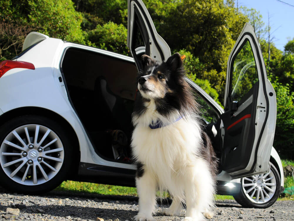 dog resting outside the car after having travel sickness