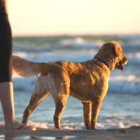 Have You Been Wrongly Converting Your Dog's Age in Human Years?