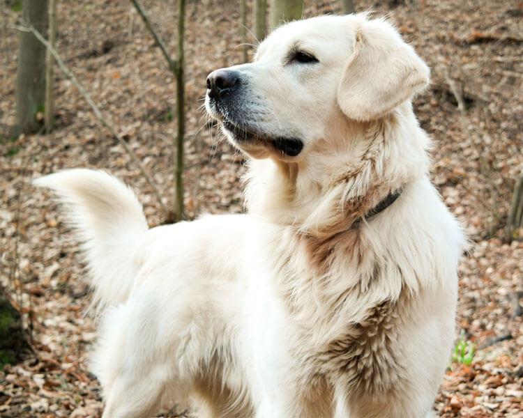 a dog with a healthy white coat