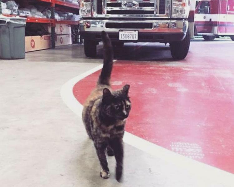 edna walking around at fire station