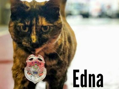 Edna the Fire Station Cat Gets Evicted from Her Home