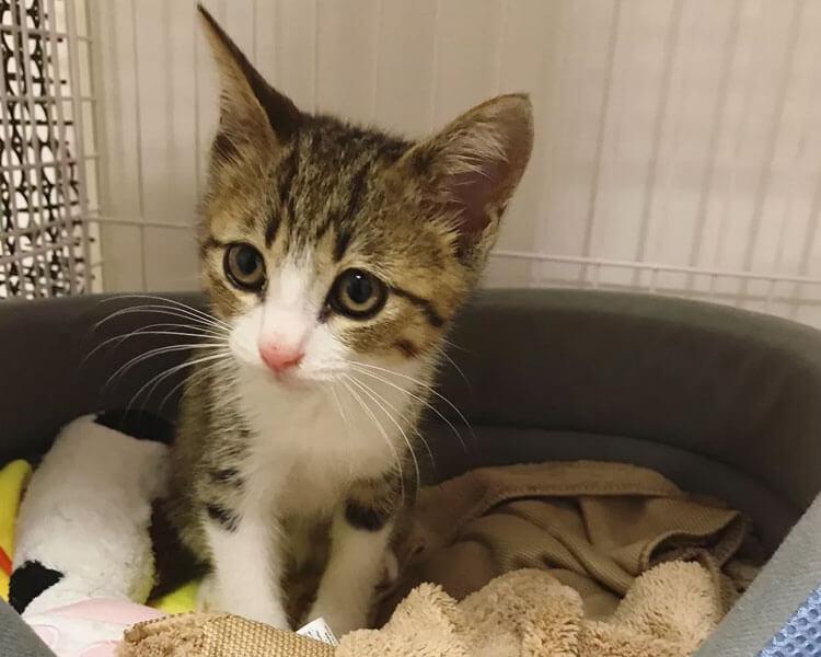 kitten Unagi resting on a litter box