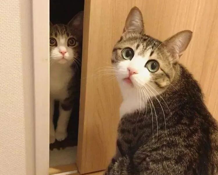 an adult cat, Suzume, checking his new friend kitten, Unagi