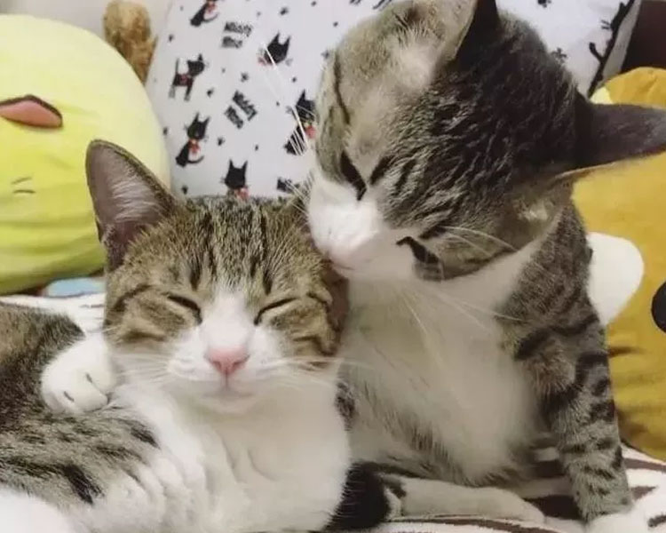kitten Unagi squeezing himself to his older brother Suzume