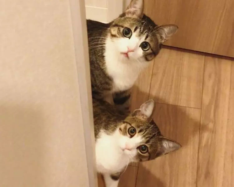 kitten Unagi and his older brother Suzume hiding on the wall