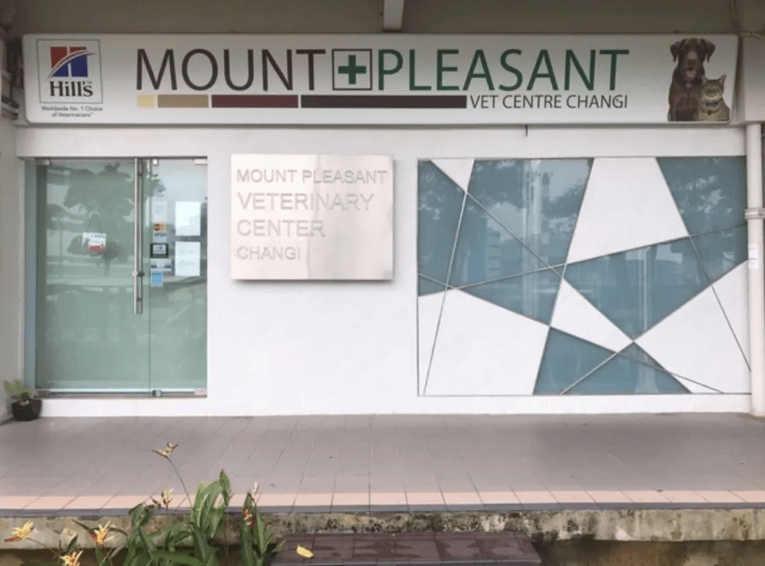 a vet clinic in changi, singapore where cat Tisoy stayed