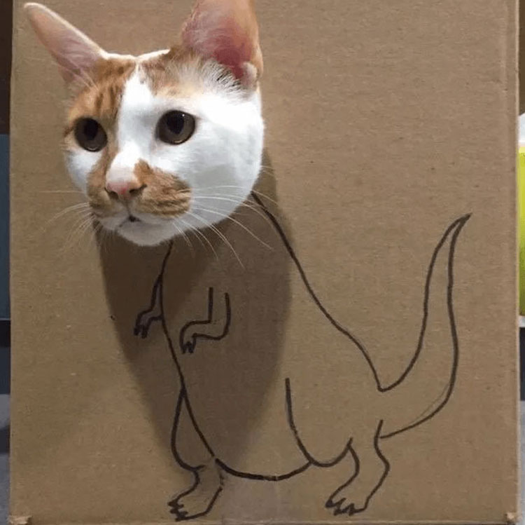 Cat Tisoy playing around his house box with a drawn dinosaur