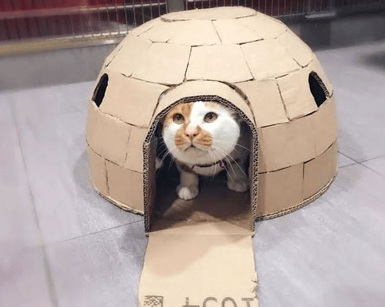 Tisoy in an igloo house box made by the vet doctors