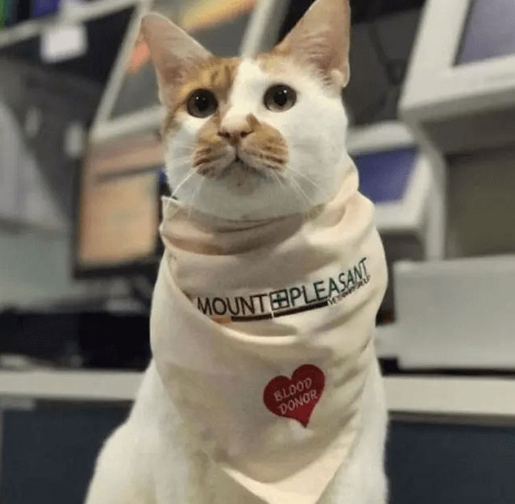 cat Tisoy wearing a scarf from Mount Pleasant Veterinary Group in Changi