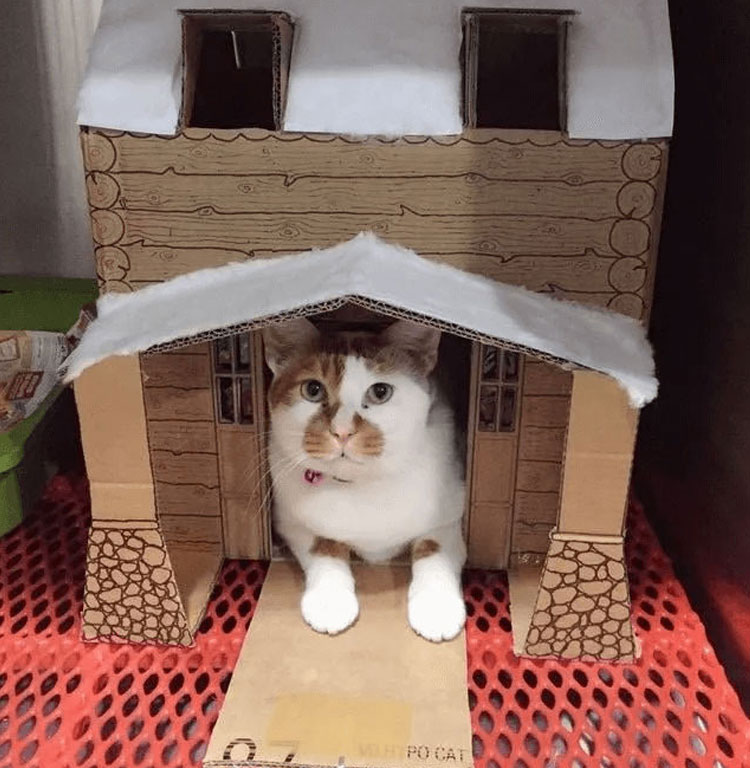 Tisoy in his house box built by the vet doctors