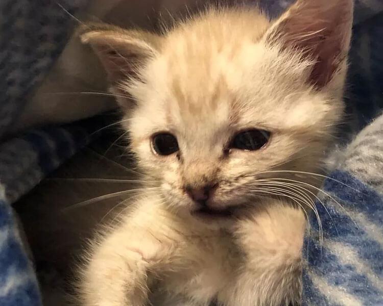 a rescued kitten named HarPURR