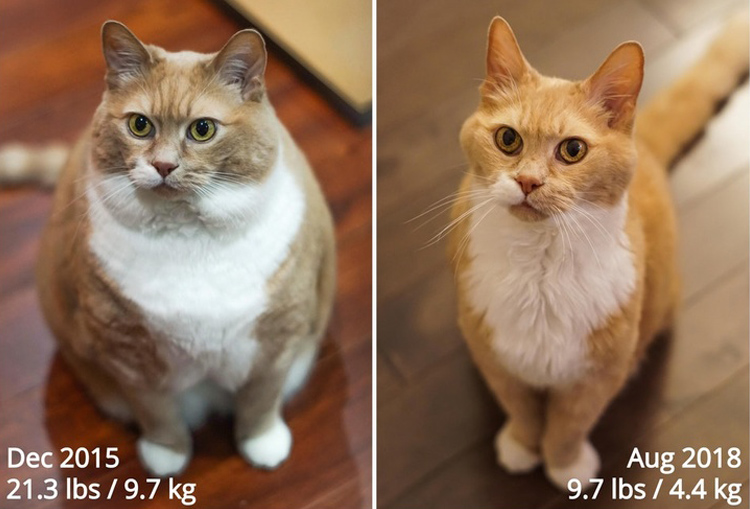 Kato ended his battle with obesity after three years given a proper diet