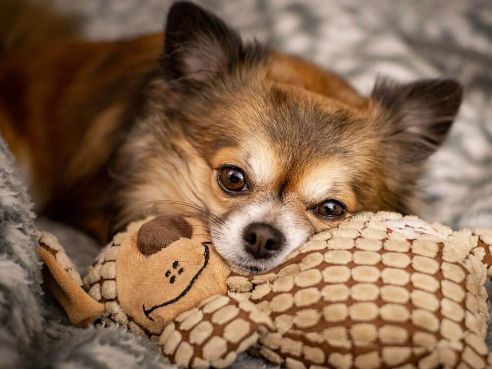 10 Longest Living Dog Breeds