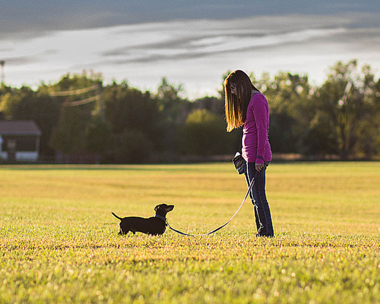 mini dachshund training tips