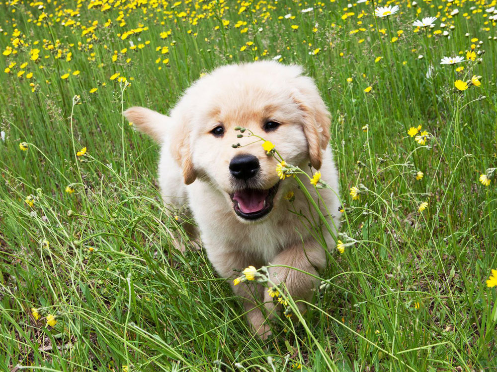 a puppy playing in the grass field plenty with flowers