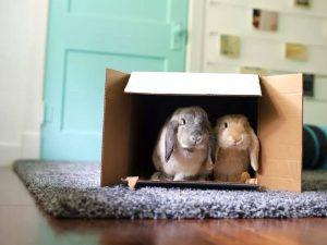 Safe Rabbit Chew Toys