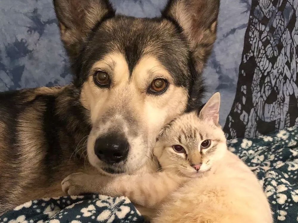 Rescued Kitten Seeks Love and Support from His Special Foster Mom