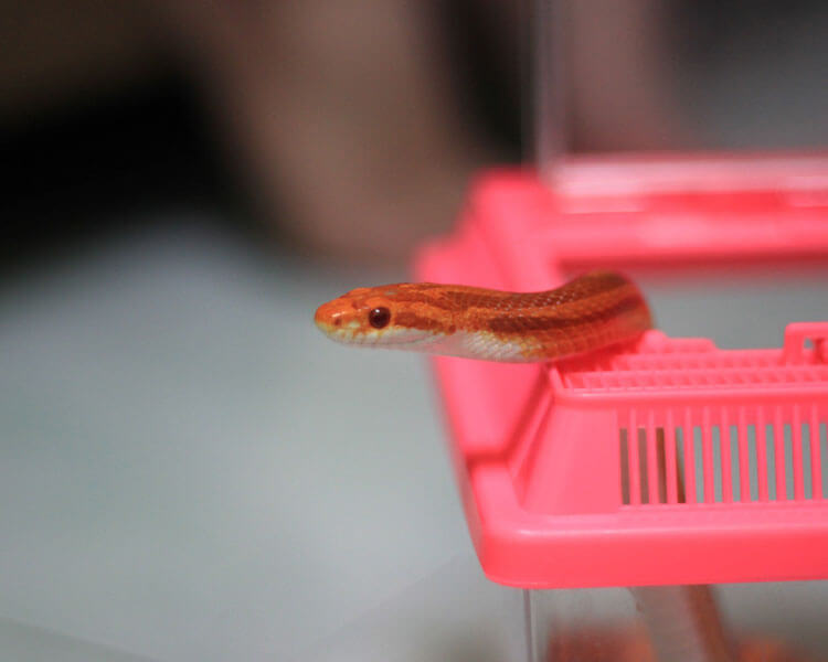 a snake coming out from a small container