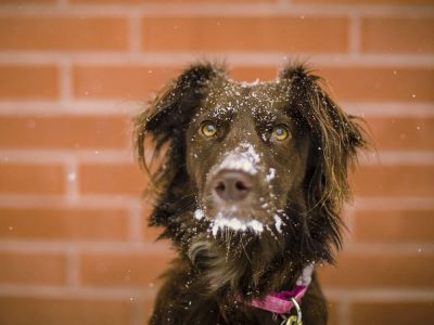 Millions of UK Pets are Suffering from Winter Blues