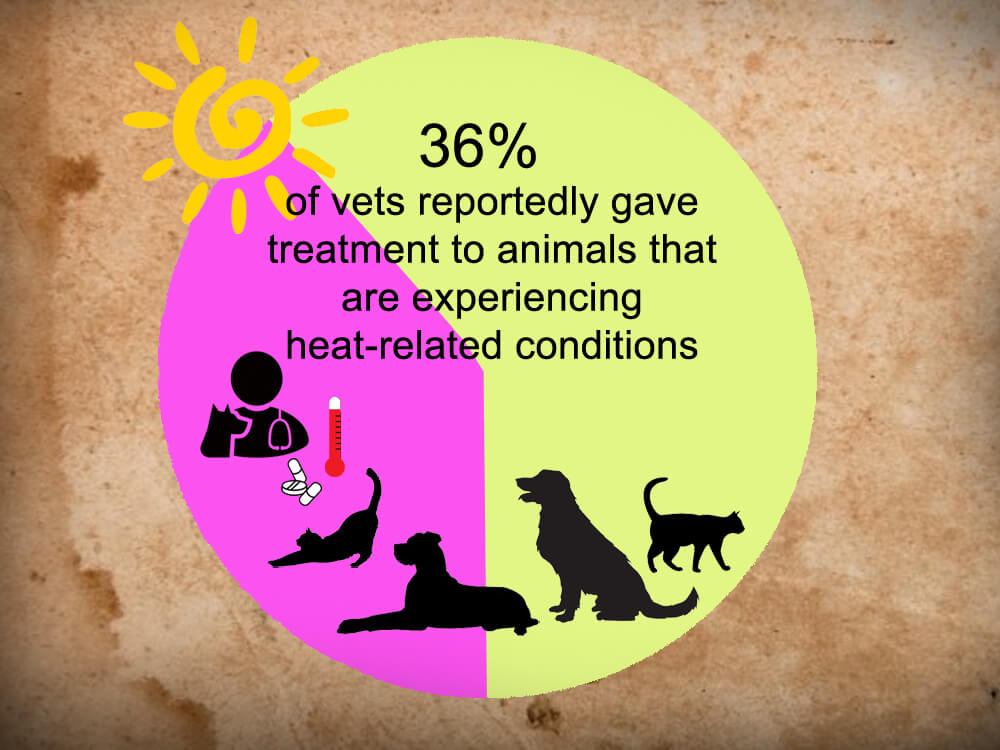36 percent vets reportedly gave treatment to animals