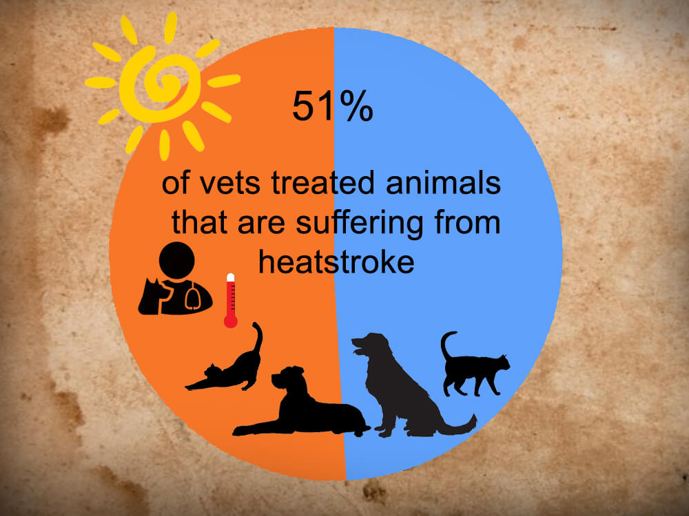 51 percent vets treated animals that are suffering from heatstroke infographics