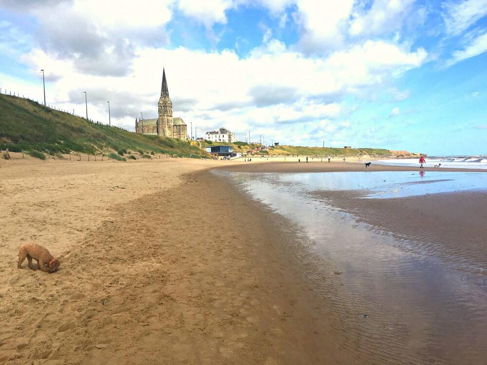 dog Newcastle-beach