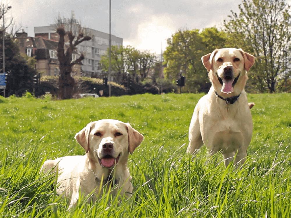 2 dogs in Nottingham