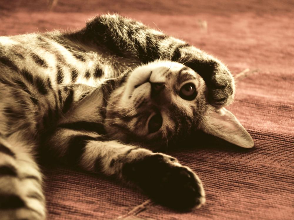 cat illness 3