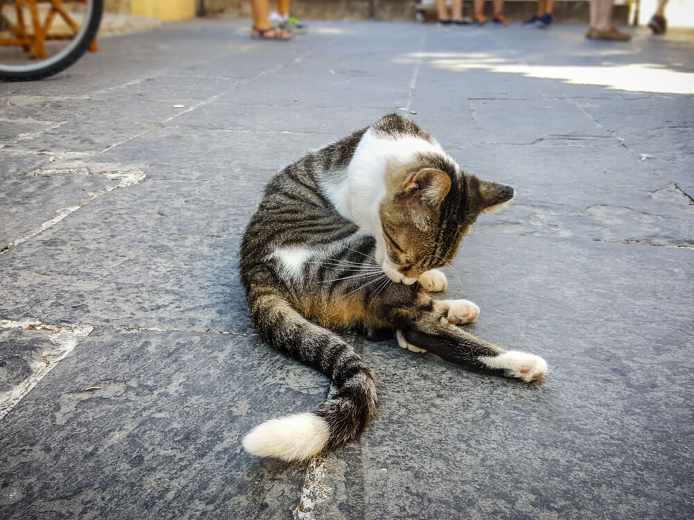 cat illness 6