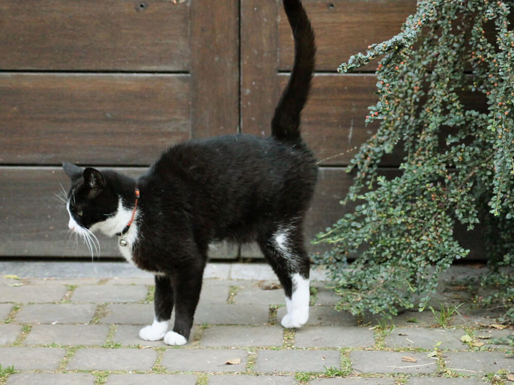 cat illness 5