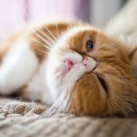 Cat Illnesses and Their 15 Subtle Signs