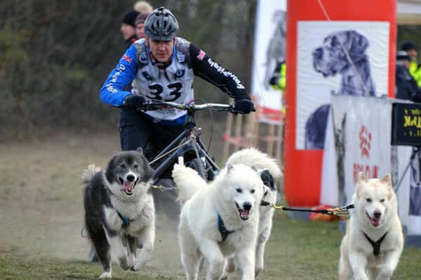 World Sleddog Association Dryland World Championships 2019